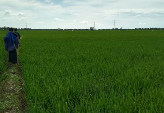 jual tanah 1,5 hektar kutawaluya karawang jawa barat dinarafi property 085693123544